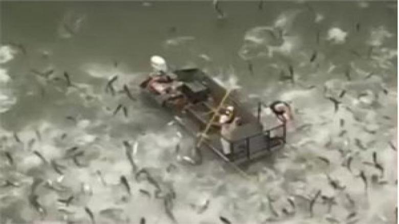 صید ماهی با استفاده از شوک الکتریکی