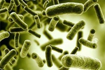 تولید برق از باکتری